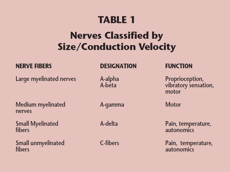 Epidermal Nerve Fiber Density Testing : An Overview - Bako